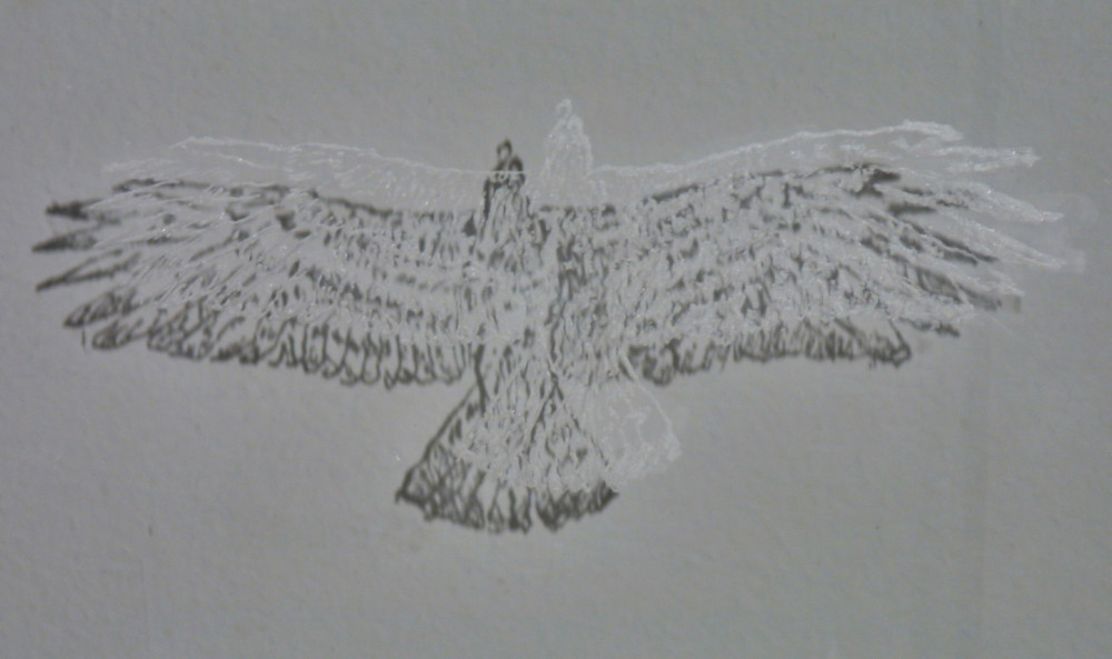 engraved glass slide casting shadow of eagle with wings expanded in flight